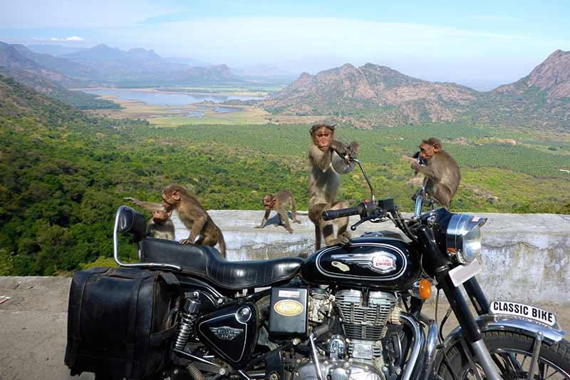 Straße von Mysore nach Masenagudi